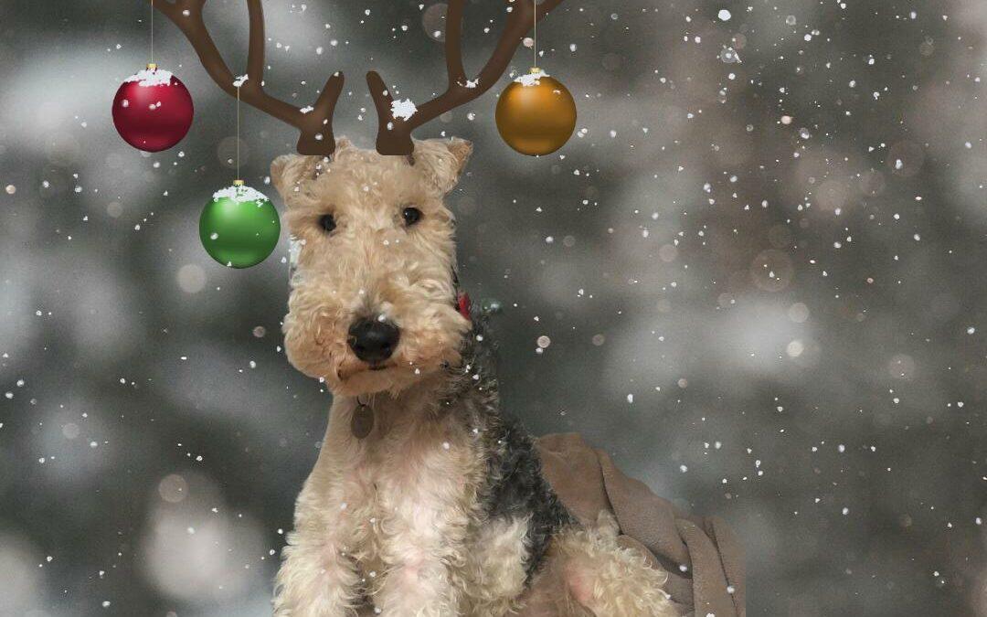 A dog called Aitch!